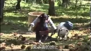 میمونی (شادی) که سگ را رهنمایی میکند - Monkey that guides a dog