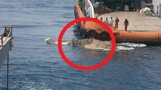 getlinkyoutube.com-Bizarre Strange Sea Creature Found In Persian Gulf