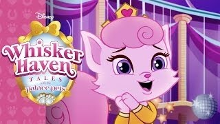getlinkyoutube.com-Disney Palace Pets in Whisker Haven - Aurora's Playful Pet Dreamy (New Palace Pets 2 Game for Kids)