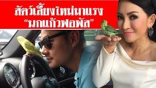 """getlinkyoutube.com-สัมภาษณ์พิเศษ สัตว์เลี้ยงใหม่มาแรง """"นกแก้วฟอพัส"""" #สดใหม่ไทยแลนด์  ช่อง2"""