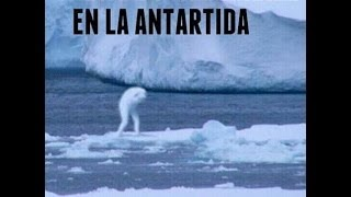getlinkyoutube.com-CRIATURA HUMANOIDE EN LA ANTÁRTIDA