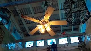 getlinkyoutube.com-FTA Videos: Florida Ceiling Fan Sightings (2012)