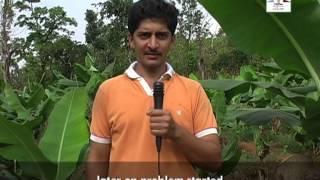 getlinkyoutube.com-Banana Cultivation for livelihood security English Part 1