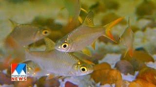 getlinkyoutube.com-Ornamental fish farming