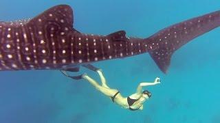 getlinkyoutube.com-GoPro Awards: Ocean Ramsey and a Whale Shark