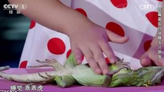 getlinkyoutube.com-Amazing five-year-old Chinese girl hypnotise animals with the stroke of her hand