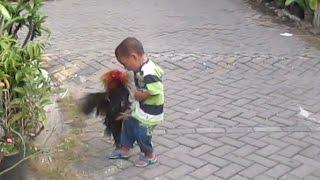 getlinkyoutube.com-lucu anak kecil berantam  vs ayam jago