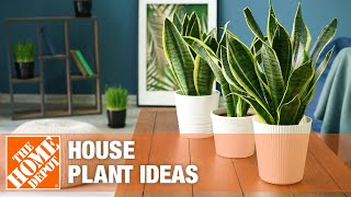 A video on ways to decorate with houseplants.