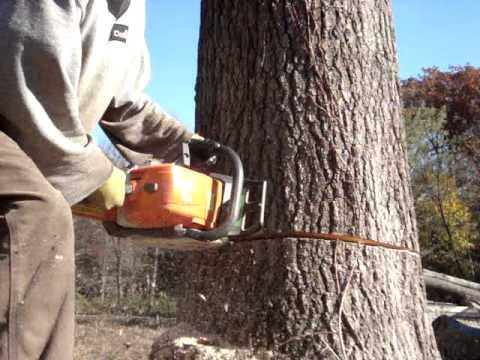 stihl chainsaw cutting big oak tree down ms-290 farmboss