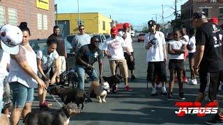 getlinkyoutube.com-DA BRONX RUFF RYDERS AMERICAN BULLY DOG SHOW