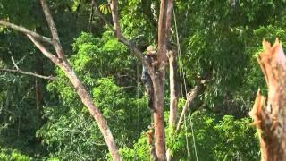 getlinkyoutube.com-สารคดี เบื้องหลัง ถ่ายทำ การสร้างบ้านต้นไม้ของชนเผ่าปาปัว HD