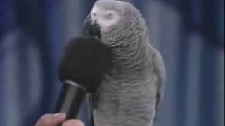 getlinkyoutube.com-amazing parrotببغاء مدهش