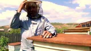 Пчеловодческие хитрости Антонова Анатолия