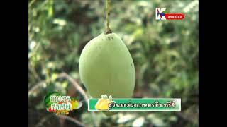 getlinkyoutube.com-สวนมะม่วงเกษตรอินทรีย์ หมอดิน 1/2