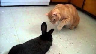 Cat meeting a bunny