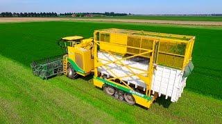 getlinkyoutube.com-Parsley Harvesting | Ploeger MKC-2TR container mower | Peterselie maaien loonbedrijf Maverko