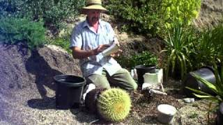 getlinkyoutube.com-repotting a large barrel cactus safely.MOV