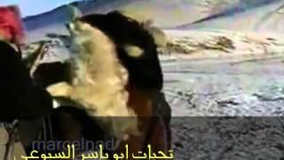 getlinkyoutube.com-النسر السيبيري  الرهيب اقوى نسر في العالم  صياد الذئاب