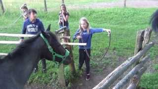 getlinkyoutube.com-SKJ Poland Park - 2013 Konie idą na kolację/ Horses go for dinner