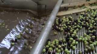 getlinkyoutube.com-Lavorazione delle olive, nel cuore della Sicilia a Pietraperzia in prov. di Enna.