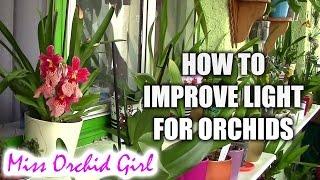 getlinkyoutube.com-How to improve light for orchids