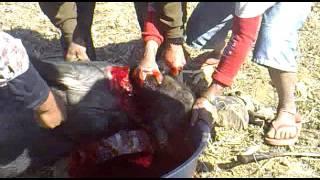 Pork Cutting In Nepal