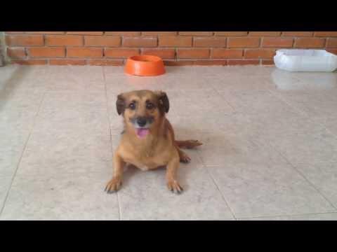 Pinina - Fundación Animal Safe -