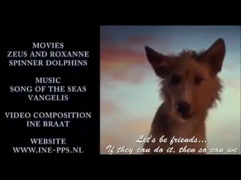 Golfinho salva cão do ataque de tubarão 2014