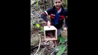 getlinkyoutube.com-caçada de paca contra extinção