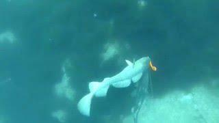 getlinkyoutube.com-Norwegen Unterwasseraufnahmen und live Bisse