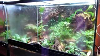 getlinkyoutube.com-Frog Room Tour- Showcasing Plants of the World