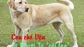 """getlinkyoutube.com-Con chó Vện và Người Tù """"cải tạo"""""""