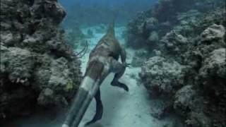getlinkyoutube.com-Caminando entre Dinosaurios - Especial - Monstruos del Océano 3/9
