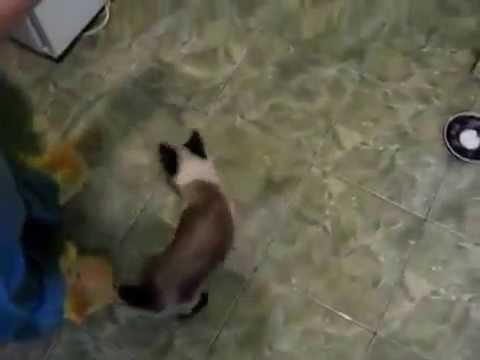 vídeos engraçados para o whatsapp - spidercat   spider gato