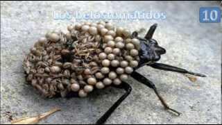 getlinkyoutube.com-Los 10 animales mas raros del mundo