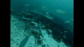 getlinkyoutube.com-Norwegia czarniaki pod wodą