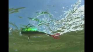 getlinkyoutube.com-Rapala Saltwater Skitter Walk & Skitter Pop