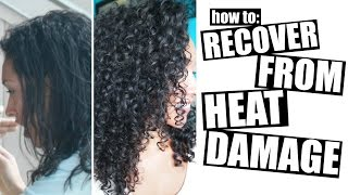 getlinkyoutube.com-How To Recover From Heat Damage To Healthy Curly Hair