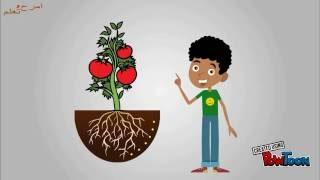 أجزاء النبتة | تعليم أطفال | امرح وتعلم