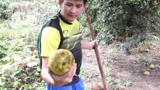 getlinkyoutube.com-ไปเก็บส้มโอสดๆ จากสวนที่เชิงเขา ล่อเอามาซะเต็มกระสอบ เอากลับแทบไม่ไหว - Pummelo from garden
