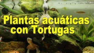 getlinkyoutube.com-Plantas acuáticas con tortugas