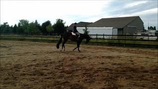 getlinkyoutube.com-The Next Big Hit 2012 AQHA Hunter Under Saddle Gedling For Sale