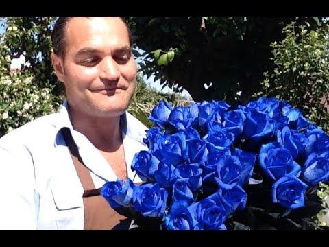 Come coltivare la rosa blue moon fai da te mania for Innaffiare aloe vera