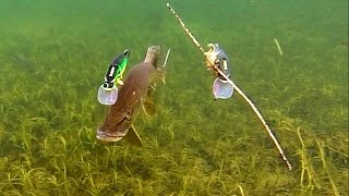 getlinkyoutube.com-Pike attack Mike & Ricky fishing lures. Hechtangeln. Gäddfiske. Pesca del lucio Рыбалка щука атакует
