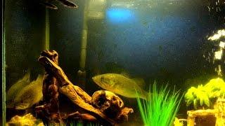 getlinkyoutube.com-Feeding Our Two Pet Bass - Bonnie and Clyde