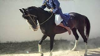 getlinkyoutube.com-Young Nihang Singh Jumping his horse