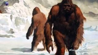 getlinkyoutube.com-Teorías de la conspiracion: Cap8: Bigfoot. documentales de conspiraciones completos HD