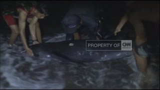 Seekor Lumba-lumba Ditemukan Kritis