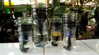 Cara Sederhana Hidroponik Botol Plastik Bekas