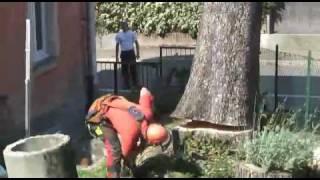 Taglio albero pericolante HQ - Helicopter Big Tree cut HQ